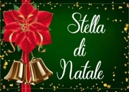 Stella-di-Natale-a-Genova